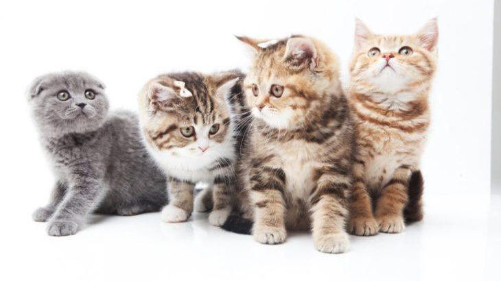 キャッツが好きすぎて劇団四季に入社した私が映画版CATSの誤解を解きたい